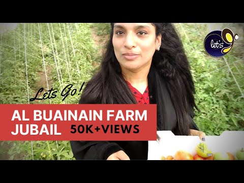 Al Buainain Farm Visit - Jubail,Saudi Arabia | Vlog-12