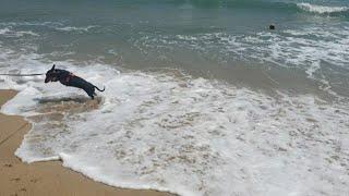 물 싫어하는 강아지랑 부산 해운대 바닷가 산책하기 | …