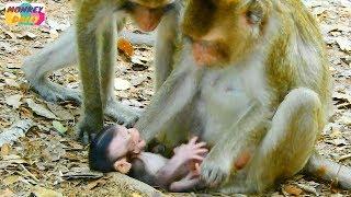 monkey cry loudly