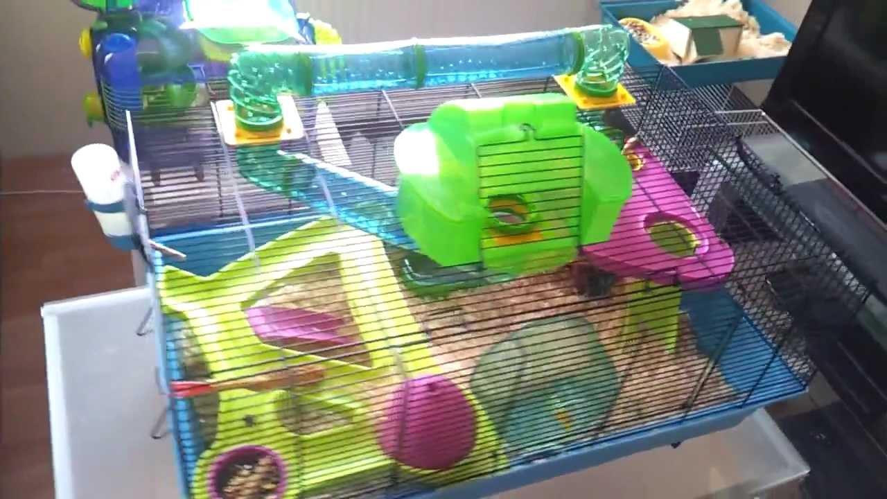 savic hamster heaven 80 van pixy youtube