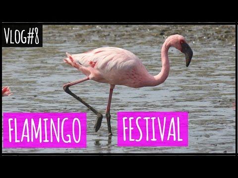 Flamingo Point at Sewri, Mumbai | Photography Adventure | Vlog