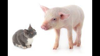 Почему у котов и свиней условия НА ЗОНЕ лучше, чем у людей - Больше чем правда, 24.06.2019