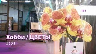 видео: 161#121 / Хобби Цветы / 03.2019 - JMP FLOWERS (МОСКВА). ОБЗОР