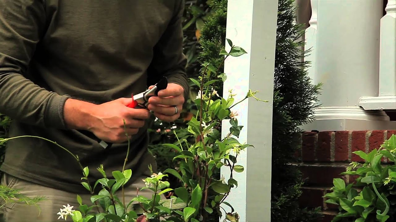Topiary Designs Part - 37: Decorating Ideas For Homemade, Outside Topiary Trees : Landscaping Designs  U0026 Ideas