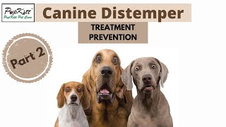 Canine Distemper in Dogs: Diagnosis, Treatment & Prevention (Part 2) | @Pupkitt Pet Care