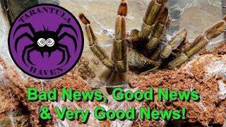 Bad News, Good News, & Very Good News!