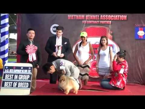 VIETNAM DOG SHOW VKA - SVKC, tháng 7-2016