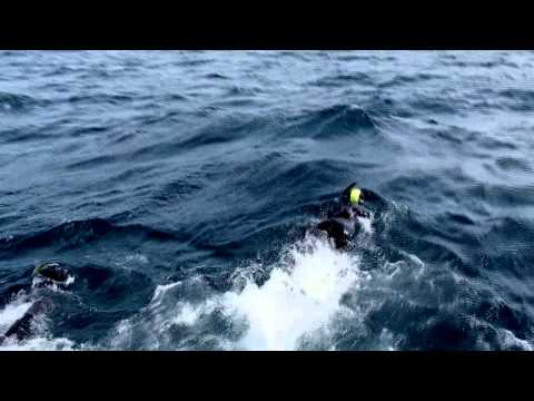 Close Encounters: Snorkeling with Whales | Close Encounters With the Humpback Whale!