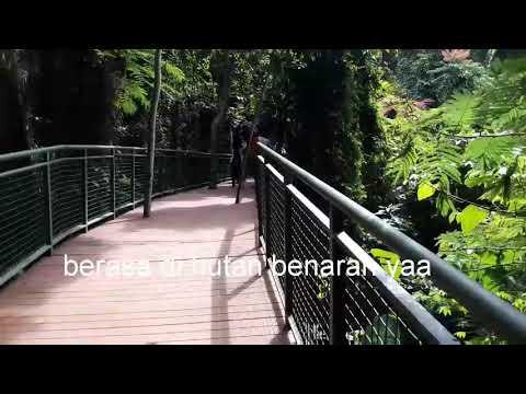 FOREST WALK BANDUNG#BABAKAN SILIWANGI BANDUNG#WDVLOG