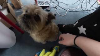 So Many Pets! - 2016 VLOGMAS DAY 12!