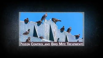Pest ControlPest Control Escalon CA 95320 209-451-5291 Official Pest Prevention