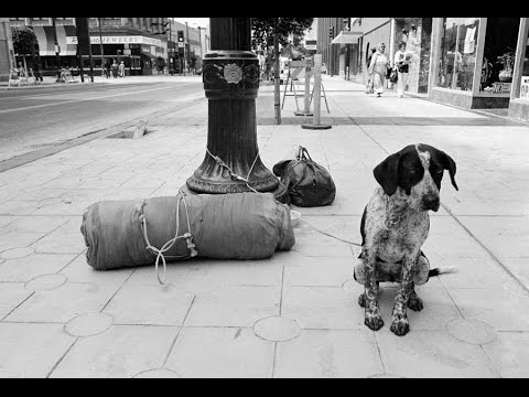 Homeless Dogs rescue. Kindness is the key to success in our