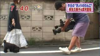 つぶあん ~わんこの縞~ (麻生久美子と愛犬) 麻生久美子 検索動画 14