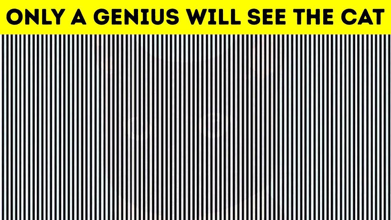 optical illusions find cat # 81