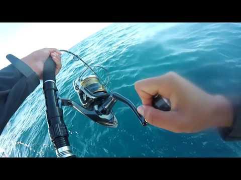 Sydney Winter Kingfish