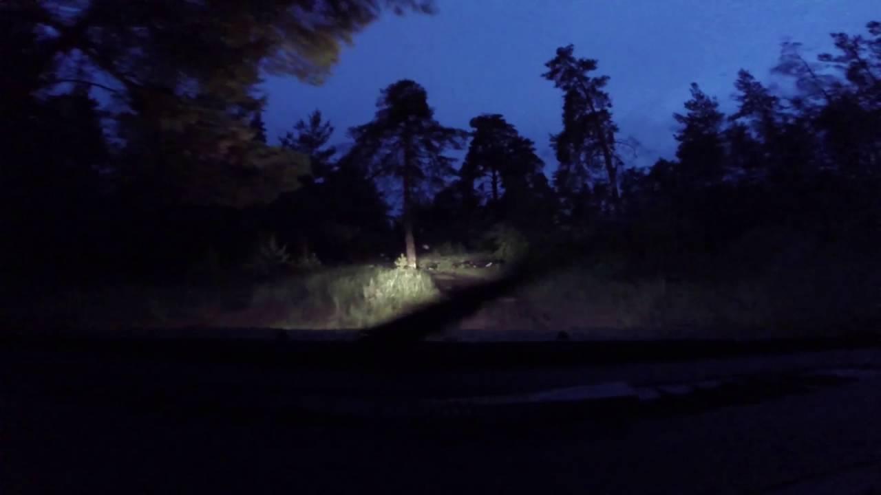 прет в лесу