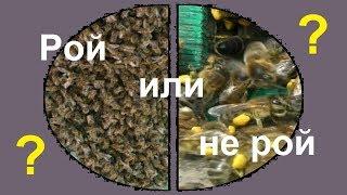 Роение пчел и медосбор