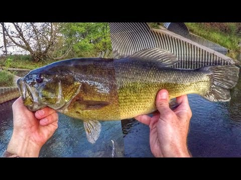 Bass Fishing Bridges