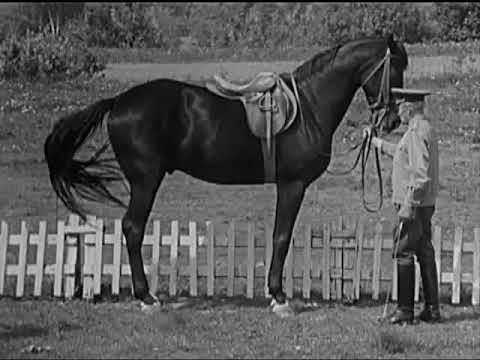 видео: Методика работы с лошадью в руках
