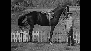 Методика работы с лошадью в руках