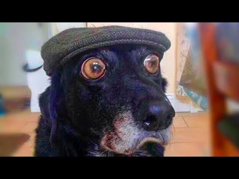 🐶 Dogs and Cats 😻 - Awesome Funny Animals' Life Videos (2018) 😁