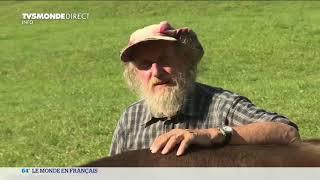 Suisse : quel avenir pour les vaches à cornes  ?