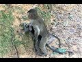What pity baby monkey doing?, Funny baby monkey playing