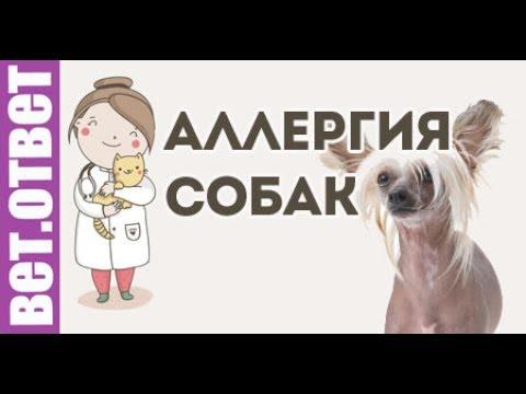 Что делать, если у собаки гноятся глаза?