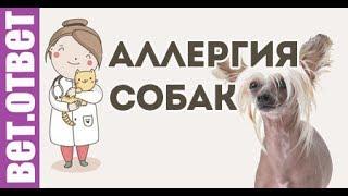 Аллергия у собаки. Вет ответ
