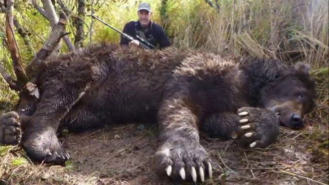 The Biggest Grizzly Bear Ever Killed In Alaska - YouTube