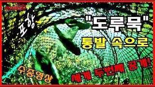 """포항 앞바다 [두번째 공개] """"도루묵""""…"""