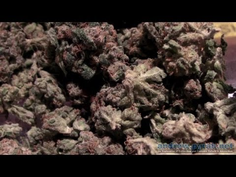 The Green House Coffeeshop - Amsterdam Coffeeshop Tour Cannabis Cup 2012 Special Edition