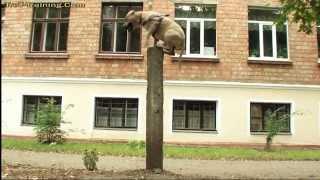 собака паркурист. смотреть ВСЕМ!!(крутой пёс. собака паркурист. смотреть ВСЕМ!! жывотные. прикол с собакой., 2013-11-02T12:59:32.000Z)