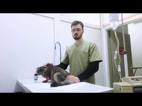 Как обрабатывать кошку после стерилизации видео