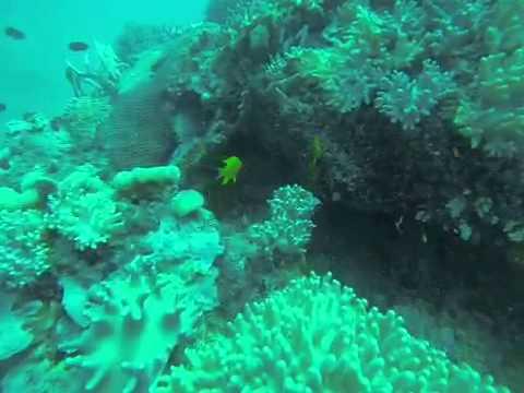 Fiji dive 1 The Zoo
