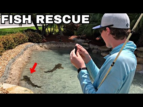Trapped Invasive Fish Are DYING! Fishing Them Out