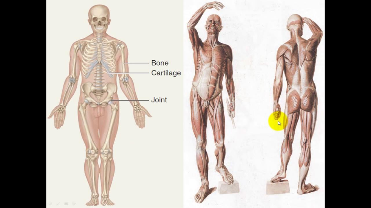 Bonito Anatomía Del Infierno Phim Festooning - Imágenes de Anatomía ...