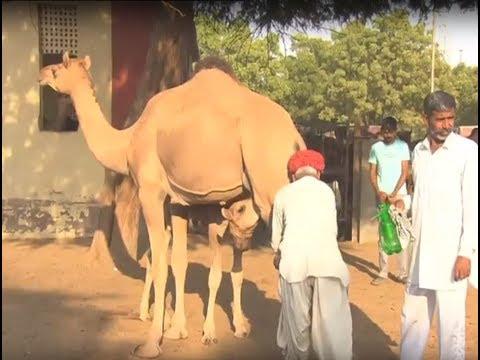 Krishi Darshan - Camel Farming Promo