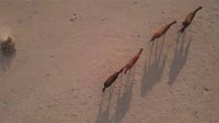 Les coursiers du Namib en Namibie