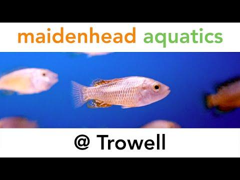 Maidenhead Aquatics @ Trowell