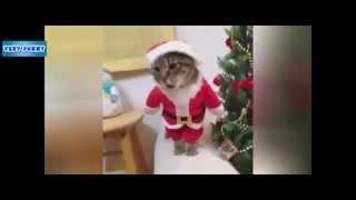Кот Дед мороз  Santa Cat   приколы с животными