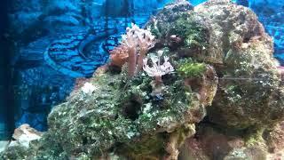 Заселение рыб в морской аквариум