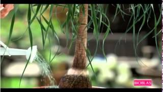 Reklama Bioblas