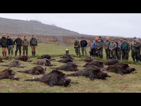 Wild Boar Hunting Romania - Best Shots Compilation; Schwarzwild Treibjagd - Beste Momente Rumänien