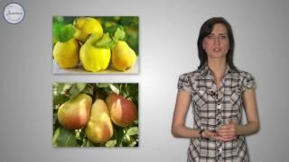 Биология 6 Понятие ткани  Разнообразие клеток растений