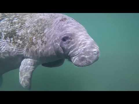 Duke Energy Florida 2017 compilation video