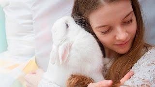 Новорождённые кролики. Прямая трансляция.