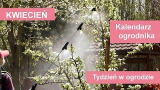 Kwiecień w ogrodzie. Kalendarz ogrodnika na 26.04 - 02.05. Prace ogrodnicze w kwietniu