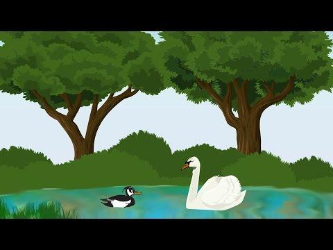 Птицы. Развивающие мультики. Энциклопедия для детей