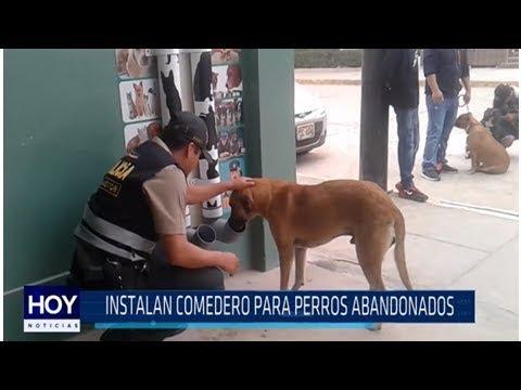 Chiclayo: Policías instalan dispensador de comida para perros callejeros [VÍDEO] Global News